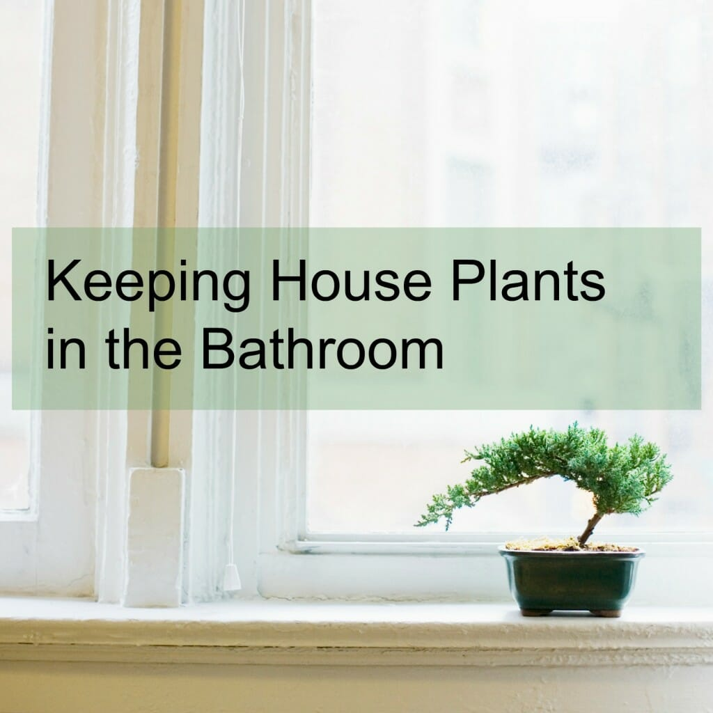Keeping House Plants in the Bathroom