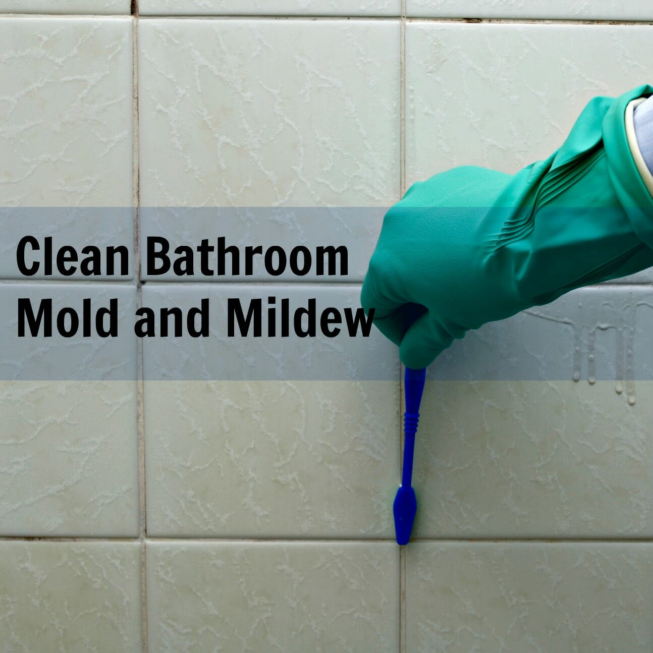 What cleans mold and mildew in shower