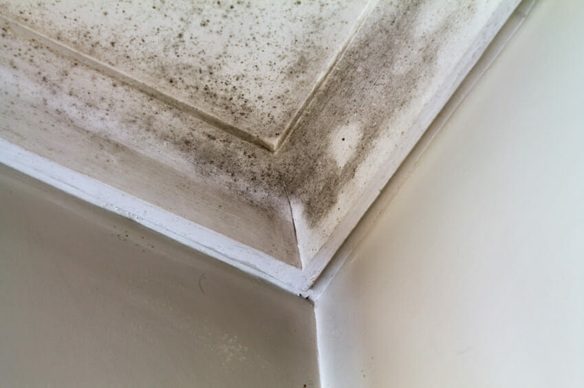 Clean Bathroom Mold And Mildew - Surface mold in bathroom